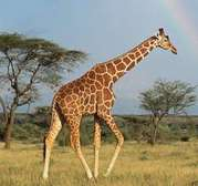 TANZANIA TOURS & WILDLIFE SAFARIS